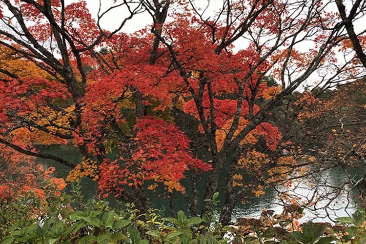 https://japan.stripes.com/travel/video-autumn-foliage-aizu-fukushima