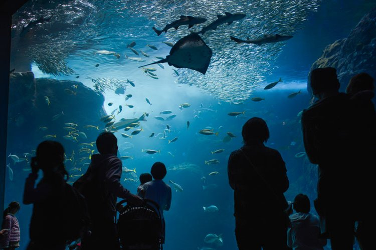 People view marine life swimming through the Sagami Bay tank at the Enoshima Aquarium in Fujisawa City, Japan. A variety of marine life, including sting rays, sharks, jelly fish and penguins can be seen throughout the aquarium. (U.S. Air Force photo by Senior Airman David Owsianka/Released)