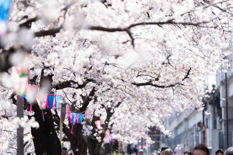 Image: Pakutaso/Sushiku